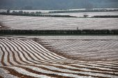 Polythene covered crops on farmland near Itchen Abbas Hampshire England UK