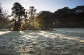 Frosty grassland Lucy Hill New Forest National Park Hampshire England UK