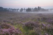 Misty sunrise Soarley Bottom New Forest National Park Hampshire England UK