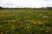 Wild flower meadow in the Hampshire Avon Valley Ringwood Hampshire England