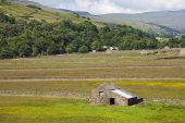 Old stone barns and hay meadows with sheep near Gunnerside Swaledale Yorkshire Dales National Park