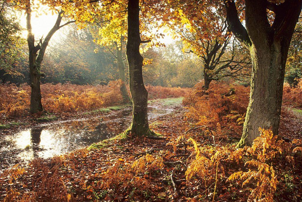 pyrenees autumn colours