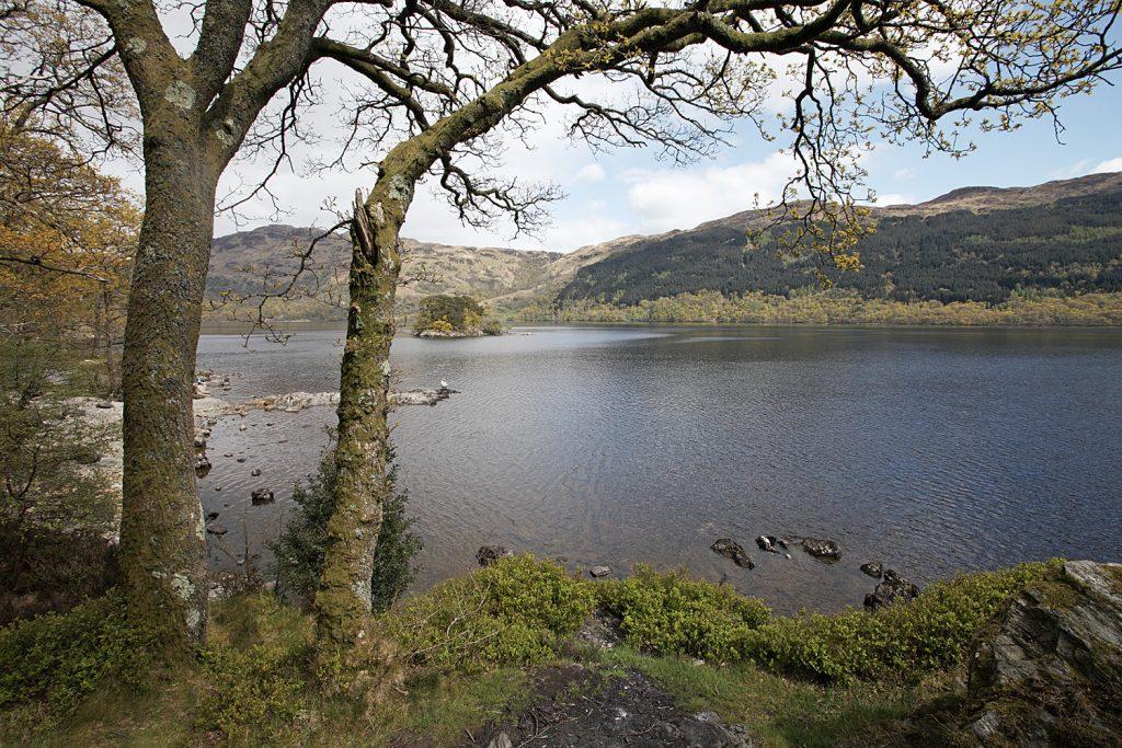 highland park quercus