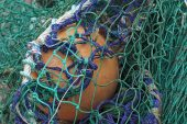 Fishing nets in Burghead Harbour Morayshire Scotland UK October 2016