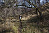Birdwatcher on the footpath through deciduous woodland to the Invertromie hide Insh Marshes RSPB reserve Strathspey Highland Region Scotland March 2017