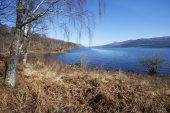 Loch Rannoch and birch trees Perth and Kinross Scotland March 2017