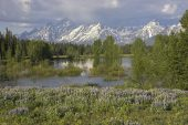 Flowers beside small pond on the Pilgrim Creek Road Grand Teton National Park Wyoming USA