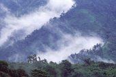 Cloud forest Ecuador South America