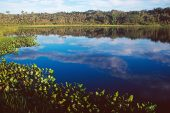 Clouds reflected in a lake near Sacha Lodge Ecuador South America