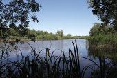 Punte Alberete Reserve Po Delta Italy