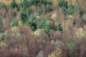 Spring hillside with mixed deciduous and coniferous forest, Wye Valley, Powys