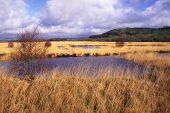 Raised bog Cors Caron Tregaron Ceredigion Wales UK