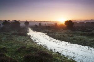 Sunrise over wet area on Ober Heath, near Brockenhurst, New Forest National Park, Hampshire, England, UK, October 2017