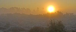 C01D0579 Misty heathland sunrise