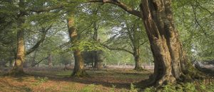 Early morning light in spring woodland, Bratley Wood, New Forest National Park, Hampshire, England