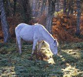 55-D-209 Pony in sunlight