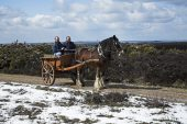 Horse and cart on snow covered heathland Hampton Ridge New Forest National Park Hampshire England