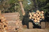 Forwarder stacking timber by side of the track ready for collection Frame Heath Inclosure New Forest National Park