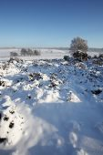 Snow in Clayhill Bottom New Forest National Park Hampshire England