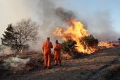 Controlled burning of heathland Broomy Plain New Forest National Park Hampshire England