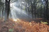 Light rays in oak woodland Broomy Inclosure New Forest National Park Hampshire England UK