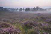 Misty sunrise Soarley Bottom New Forest National Park Hampshire England UK