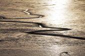 Intertidal mud Exe Estuary Devon England