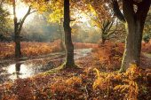 Autumn colours Berry Wood New Forest National Park Hampsire England UK