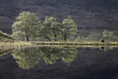Trees reflected in pond Glen Etive Highland Region Scotland