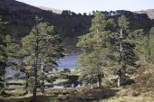 Loch Beinn a Mheadhoin and Ancient Caledonian Pine Forest Glen Affric Nature Reserve Glen Affric Highland Region Scotland