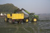 Farmer collecting Sea-lettuce from the Baie de Lannion Brittany France for organic farming