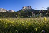 Mont Aiguille and wildflower meadow in early morning light near Chichilianne Vercors Regional Natural Park Vercors France