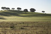 Rolling plains near Entradas Alentejo Region Portugal