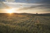 Sunrise over arable fields near Mertola Alentejo Region Portugal