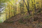 Deciduous forest in autumn Zempelin Hills Hungary
