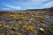 Coastal view across rocky shore and rock pools Bleaker Island Falkland Islands November 2015
