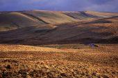 Upland sheep walk in late evening light, near Rhayader, Powys, Wales