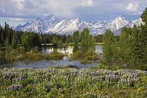 Flowers beside small pond on the Pilgrim Creek Road Grand Teton National Park Wyoming USA
