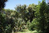 Wattle Track Tiritiri Matangi Island Scientific Reserve North Island New Zealand