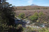 Whakapapanui stream with Ngaruhoe mountain beyond Tongariro National Park North Island New Zealand