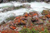 Orange lichens in Otira Gorge Arthur's Pass National Park South Island New Zealand