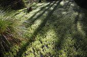 Shadows across pond weed Ship Creek Nature Trail South Island New Zealand