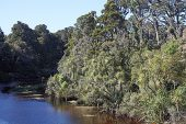 Ancient swamp forest at Ship Creek Nature Trail South Island New Zealand