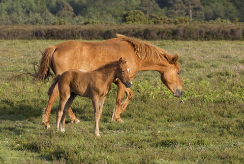 01DD0289 Mare and foal A6 Greetings Card