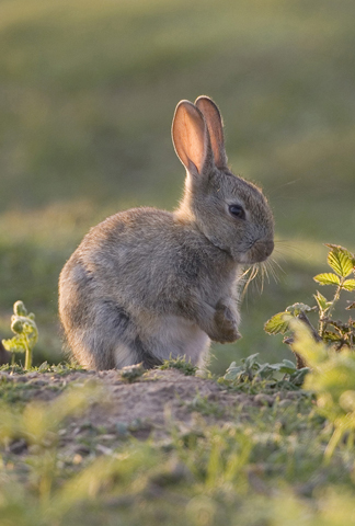 01DD0325 Young rabbit A6 Greetings Card