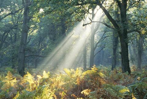 C1-9201 Light rays in Oak wood A6 Greetings Card